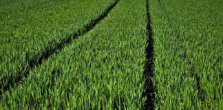 Jak wybierać skuteczne preparaty rolnicze